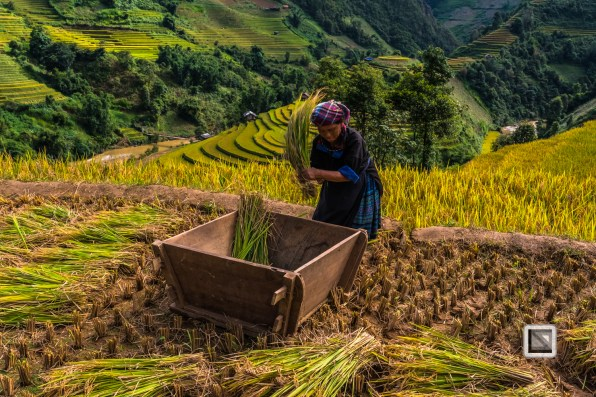 vietnam-mu_cang_chai-yen_bai_province-143