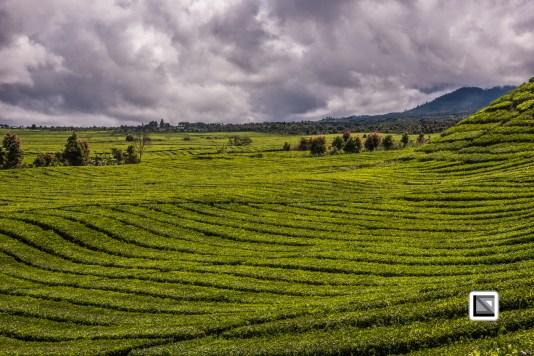 Indonesia-Sumatra-244