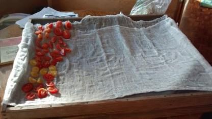 drying-fruit-8