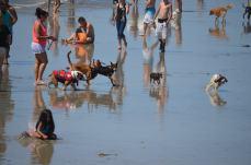 Dog's Beach