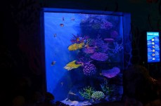 Aquário de peixes - Photo by Claudia Grunow