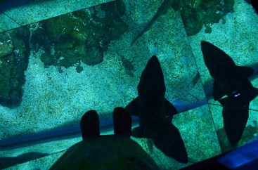 Sob meus pés um grande tubarão- Photo by Claudia Grunow