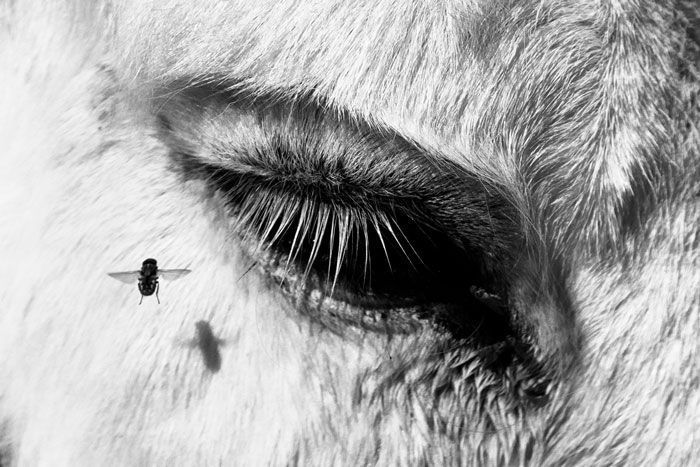 © Gian Marco Sanna