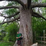 Appalachian Trail Keffer Oak