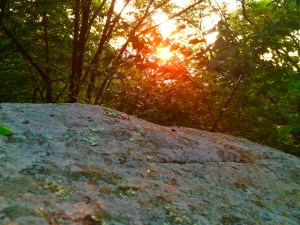 Appalachian Trail Byrds Nest #3