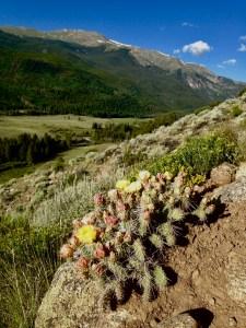 colorado trail cactus clear creek