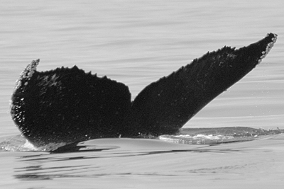 CS325. Photo credit: Eugene Stewart, 2009.