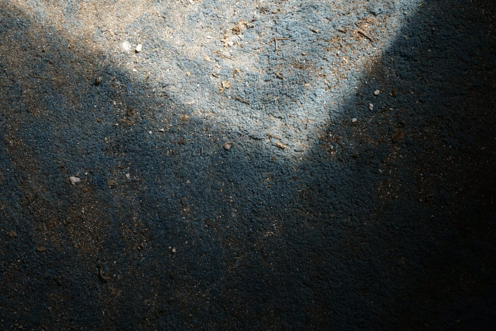 Large chromogenic print of blue carpet covered in small dirt particles, feathers, and bird droppings lit from an east-facing window