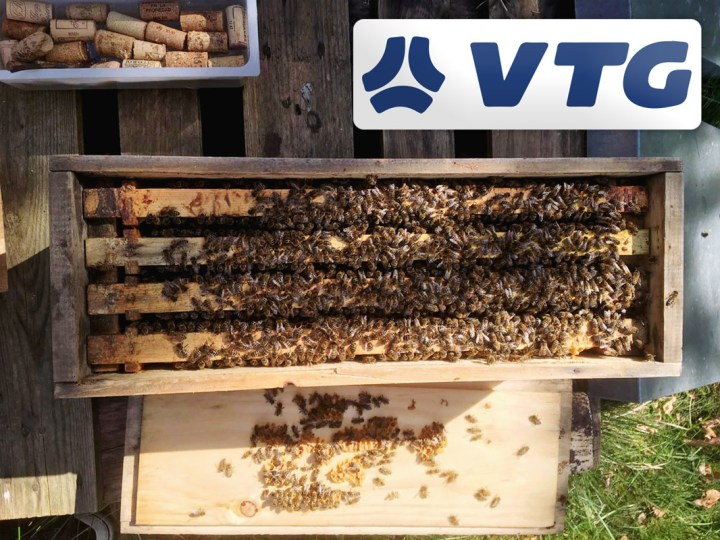 Since the End of 2019 VTG has Been the Proud Sponsor of Four Bee Colonies with Around 200,000 Bees in Total