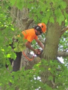 pruning london