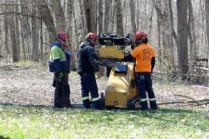 Working together, crews spread out across the 125-acre site to fell dead ash trees which impeded full use of the facilities