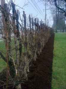 CLC Tree Services prefers to use natural mulch in our landscaping projects