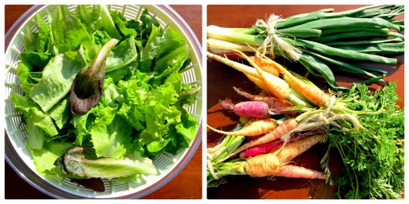Farmer's Market Finds Collage