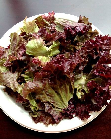 Lunch time Lettuce