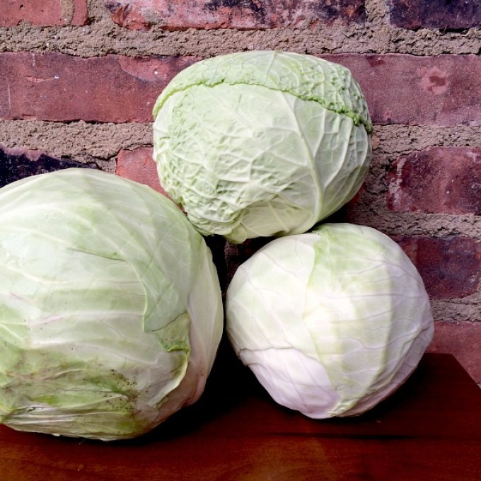 Cabbage Line Up