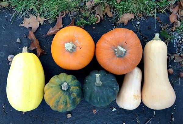 Squash Hoard - Pumpkin, Spaghetti, Butternut and Acorn
