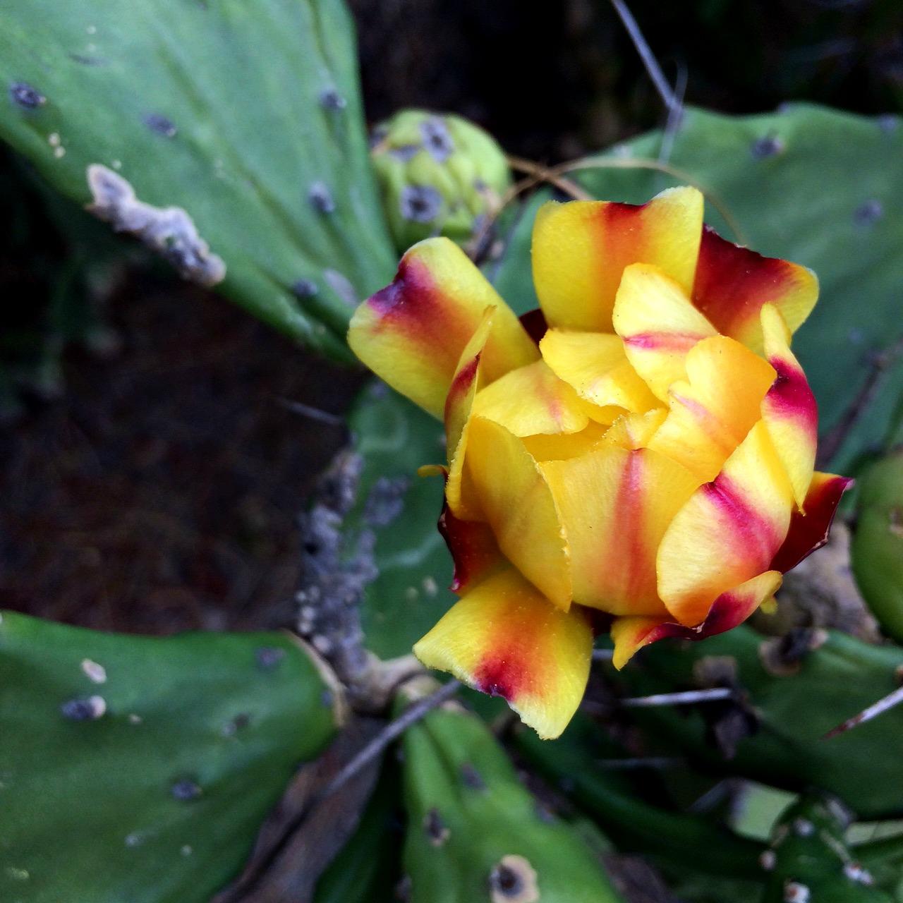 Balboa Park Cactus Garden Flowers