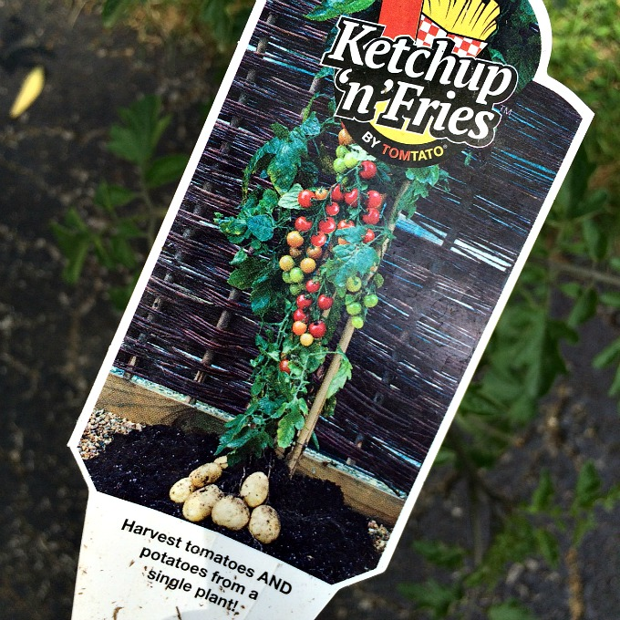 Ketchup and Fries Tomato and Potato Plant