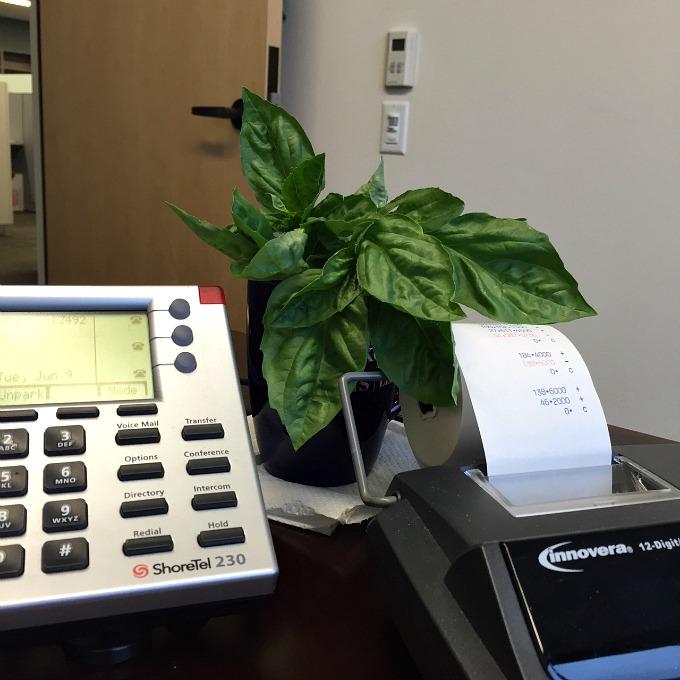 Office Basil