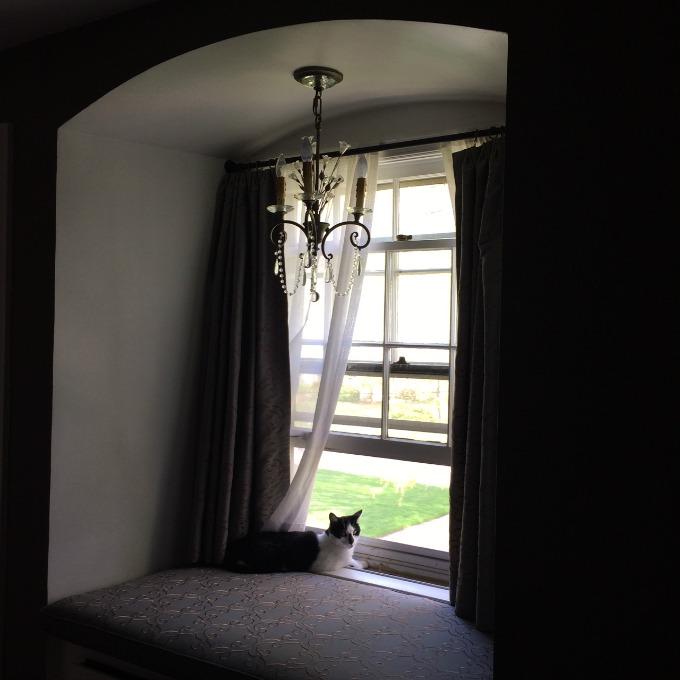 Oscar in the Bedroom Window