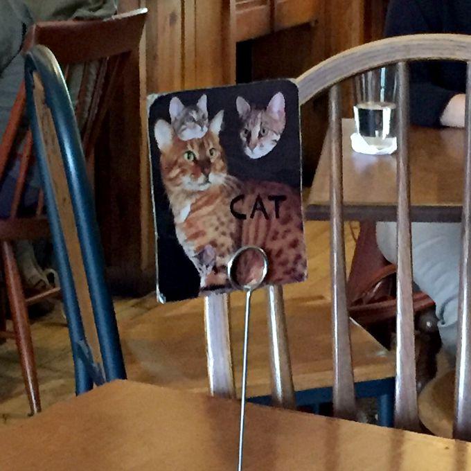 Cat Awkward Family Photo Style