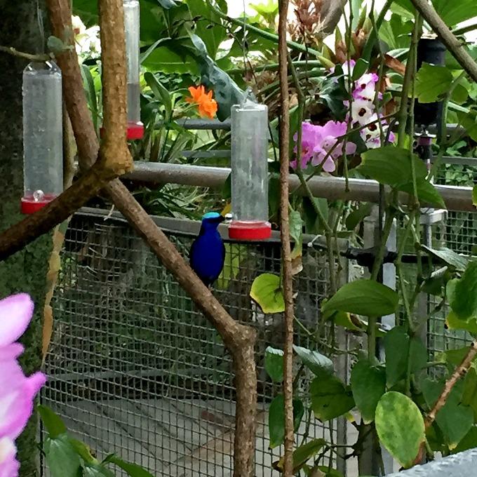 Botanical Gardens Orchid Mania 2016 Tropical Bird