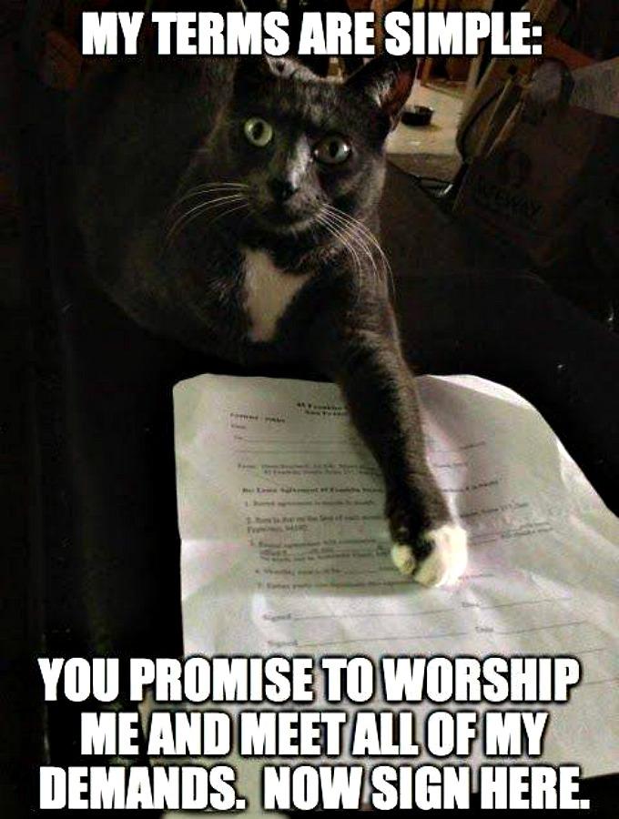 Cat Meme Terms are Simple