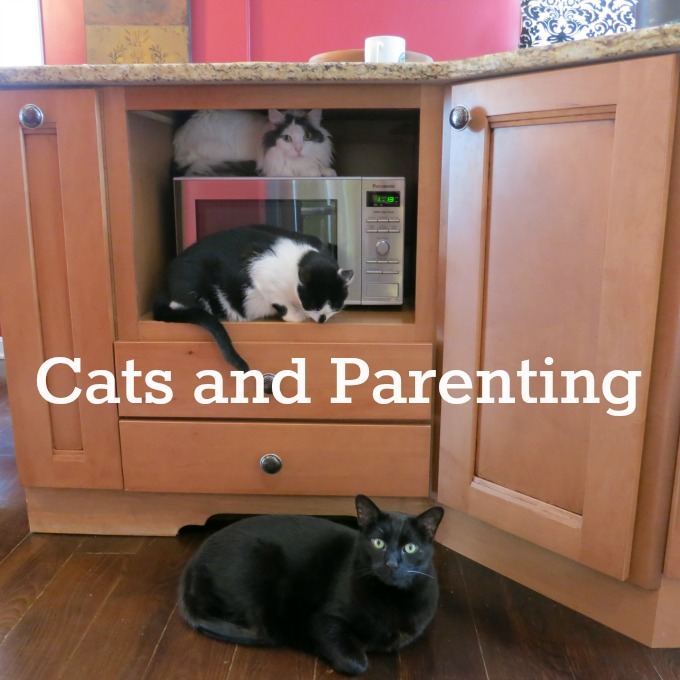 Cats and Parenting