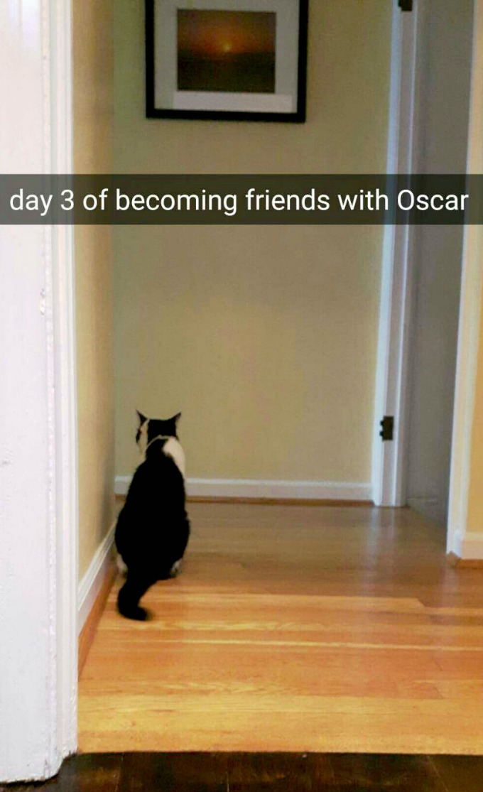 Day 3 of Becoming Friends with Oscar