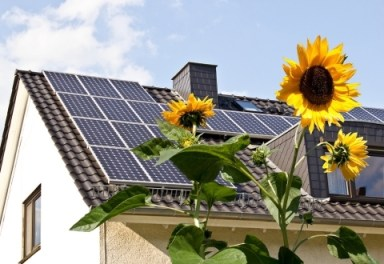 Solar-cells-on-a-roof-with-sun-flowers