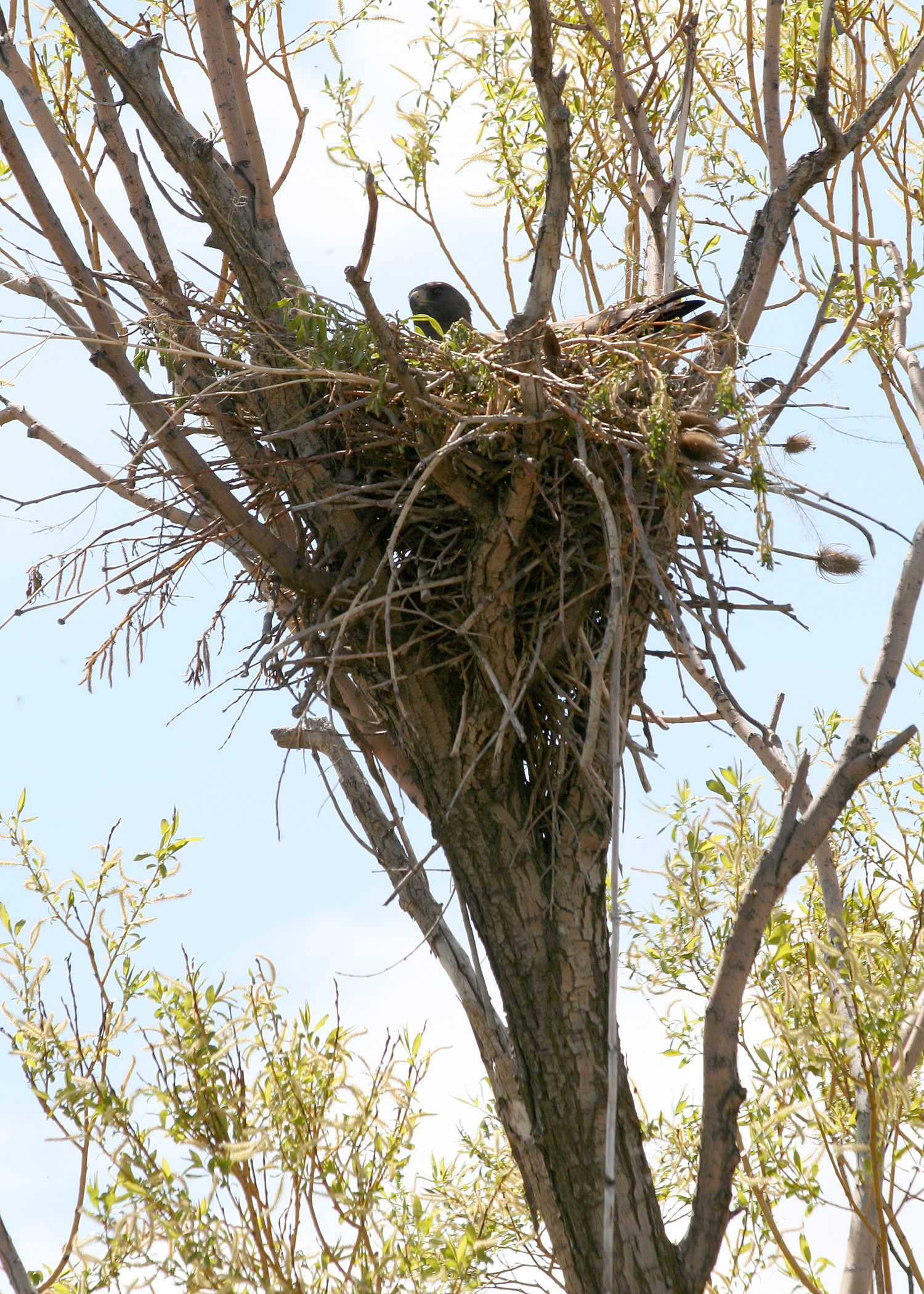 Dead Bird Nests Contain 36 Different Pesticides, Including DDT