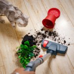 Best Vacuum Cleaners For Laminate Floors