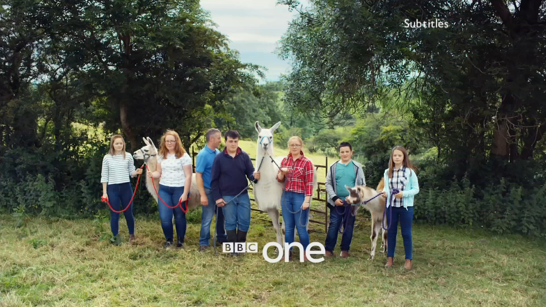 PICTURED: BBC One ident - Llama Trekkers, Armagh.