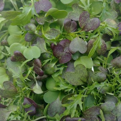 Clean Genes Farm Bold micro green mix