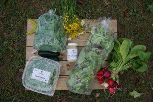 Clean_Genes_Farm_Harvest