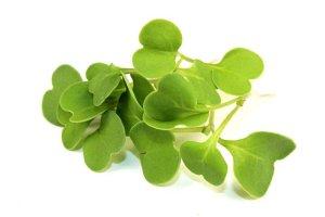 arugula-microgreen-leaves-1000×667