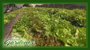 Video_Clean Genes Farm | Volunteer Gardener
