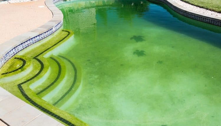 How To Fight Algae?
