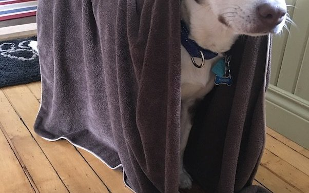 e-cloth Pet Towel Review – 11 Things I Love about this Towel