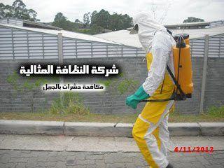 شركة مكافحة حشرات بالجبيل 0503152005