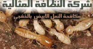 مكافحة النمل الابيض بالخفجي
