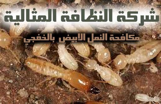 شركة مكافحة النمل الابيض بالخفجي 0502980124