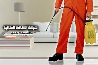 شركة مكافحة حشرات بالبقيق 0562198010