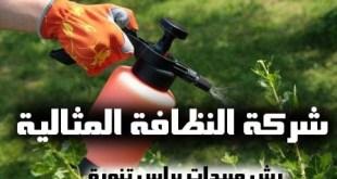شركة رش مبيدات راس تنورة