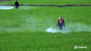 شركة رش مبيدات بالجبيل شركة رش مبيدات بالجبيل شركة رش مبيدات بالجبيل 0503152005 Pesticide spraying companys in Jubail 300x169