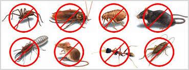شركة مكافحة حشرات بالدمام شركة مكافحة حشرات بالدمام شركة مكافحة حشرات بالدمام 0531390740 download 23