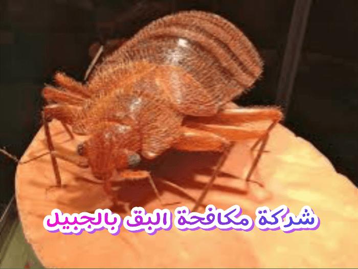 شركة مكافحة البق بالجبيل 0503152005