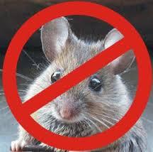 شركة مكافحة الفئران بالدمام 0503152005