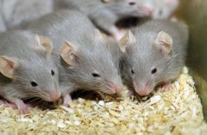 شركة مكافحة الفئران بالدمام.... شركة مكافحة الفئران بالدمام 0531390740
