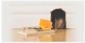شركة مكافحة الفئران بالدمام.